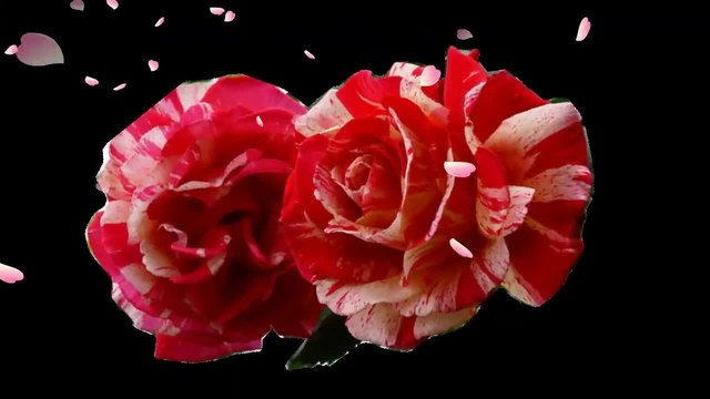 Roses, saxophone and love! ... (Marionne Wheels - saxophone) ... ...